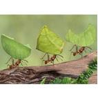 طبیعت/چیزهای کوچک/گروه مدیریتی آرشیام